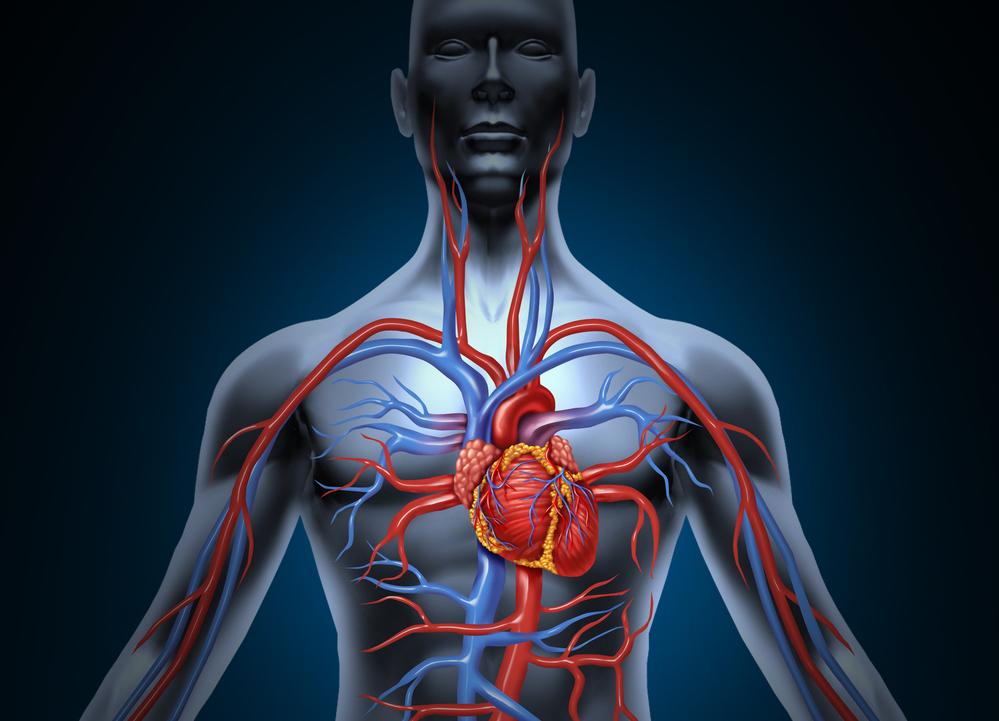 Sepelsuonien epämuodostuma - Sydänsairaala - Tietoa